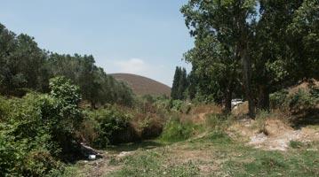 יוגב מגידו רמות מנשה מג`וערה למשמר העמק