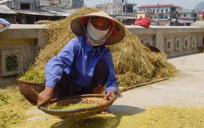 fixtravel פיקסטראבל תמונות וייטנאם